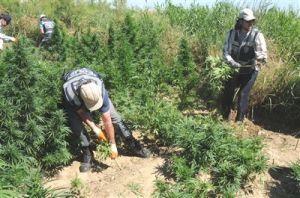 PKK Drogen