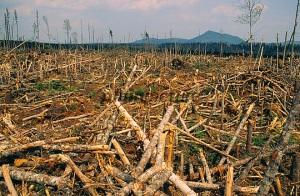 Die AKP mag keine Bäume